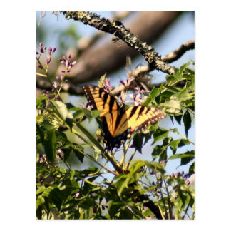 Yellow Tiger Swallowtail Butterfly Photo Postcard
