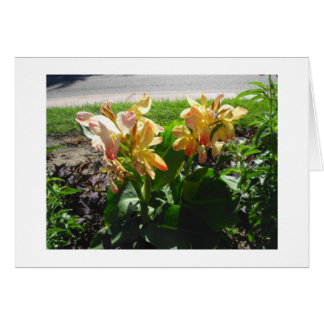 Yellow Tipped w Red Cannas Blank Card