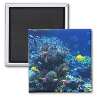 Yellow Tropical Fish Magnet
