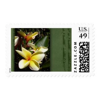 Yellow tropical plumeria flower postage