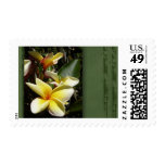 Yellow tropical plumeria flower stamps