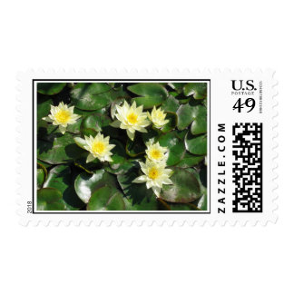 Yellow Tropical Water Lilies Postage