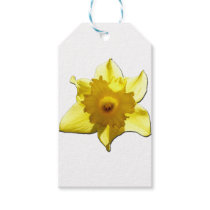 Yellow Trumpet Daffodil 1.0 Gift Tags