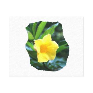Yellow Trumpet Flower Photograph Canvas Print