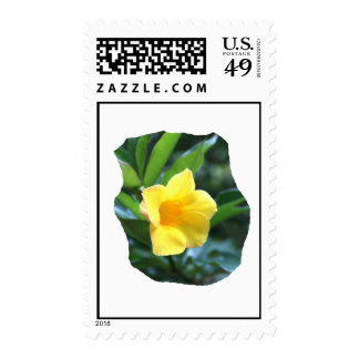 Yellow Trumpet Flower Photograph Postage