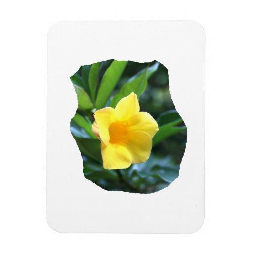 Yellow Trumpet Flower Photograph Rectangular Photo Magnet