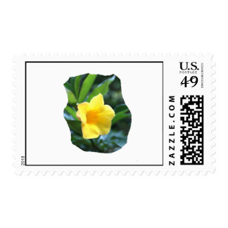 Yellow Trumpet Flower Photograph Stamp