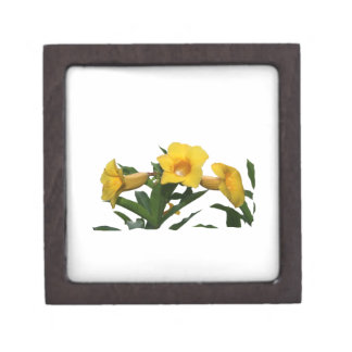 Yellow Trumpet Flowers cutout photo Premium Jewelry Boxes