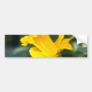 yellow Trumpet Narcissi, 'Explorer' flowers Car Bumper Sticker