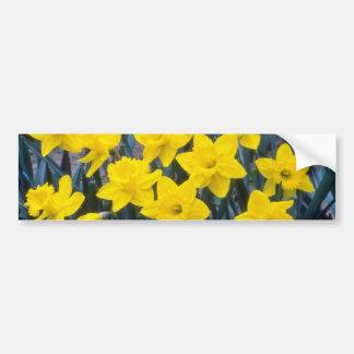 yellow Trumpet Narcissi King Alfred flowers Bumper Sticker