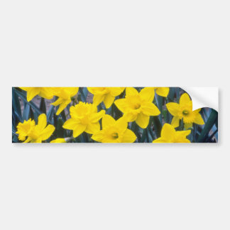 yellow Trumpet Narcissi King Alfred flowers Bumper Stickers