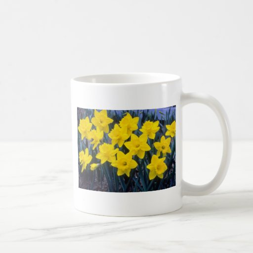 yellow Trumpet Narcissi, 'King Alfred' flowers Mug