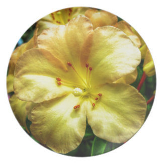 Yellow Trumpet Plate
