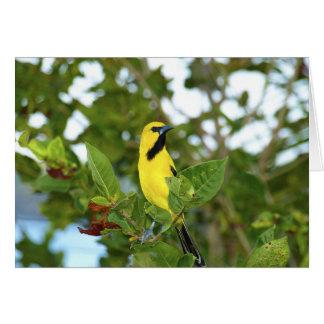 Yellow Trupial bird Card