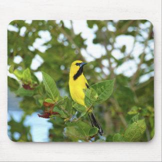 Yellow Trupial bird Mouse Pad