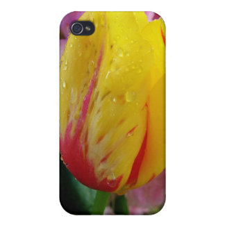yellow tulip after rain iPhone 4/4S case