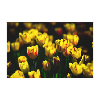 Yellow tulip flowers canvas print