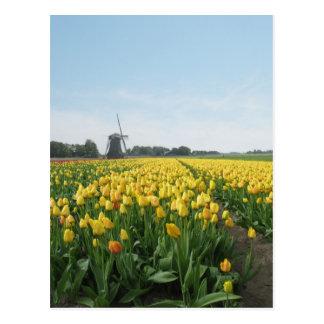 Yellow Tulip Flowers Field & Windmill Holland Postcard