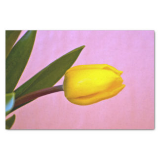 Yellow Tulip, Green Leaves, on Pink Tissue Paper