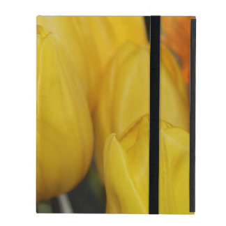 Yellow Tulip photo iPad Covers