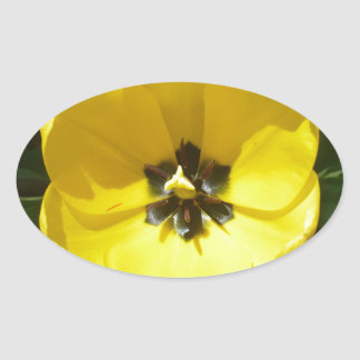 Yellow Tulip Photograph Oval Sticker