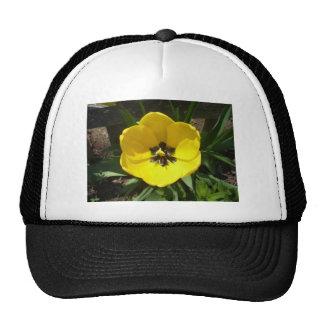Yellow Tulip Photograph Trucker Hat