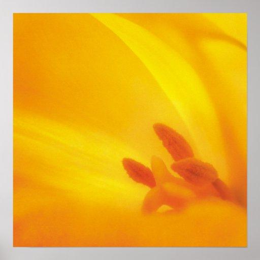 Yellow Tulip - poster