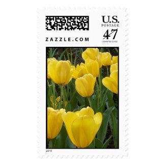 yellow tulip stamp