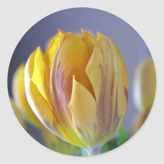 Yellow Tulip Classic Round Sticker