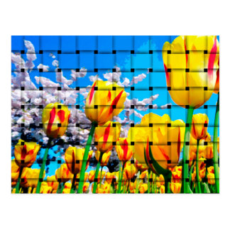 Yellow Tulip Weave Postcard