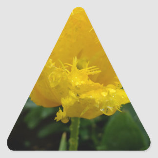 Yellow Tulip with water drops Triangle Sticker