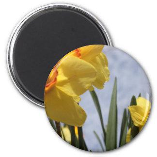 Yellow Tulips 2 Inch Round Magnet