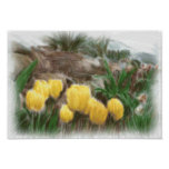 Yellow Tulips 2 Print