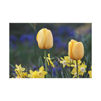 Yellow tulips and jonquils canvas print