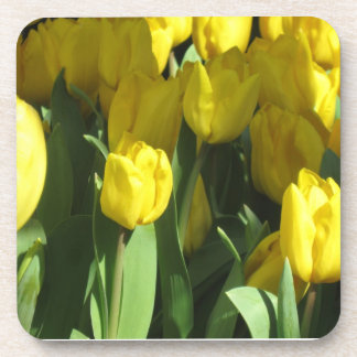 Yellow tulips beverage coaster