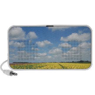 Yellow Tulips Blue Sky Landscape Mp3 Speakers