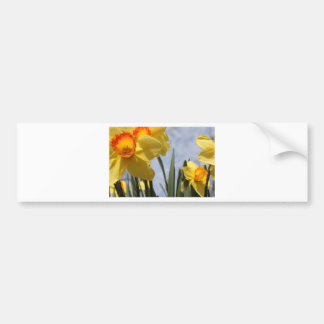 Yellow Tulips Bumper Sticker