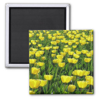 Yellow Tulips Field Square Fridge Magnets