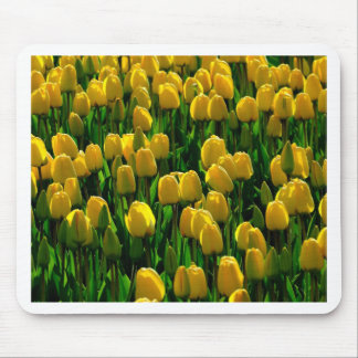 Yellow tulips from Holland Mousepads