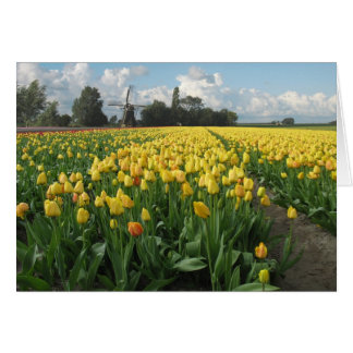 Yellow Tulips in a Field and Windmill in Holland Card