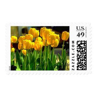 Yellow Tulips In Garden Stamp