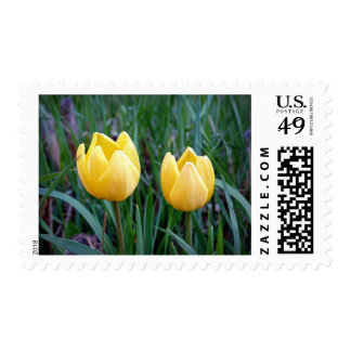Yellow Tulips in the Field Stamps