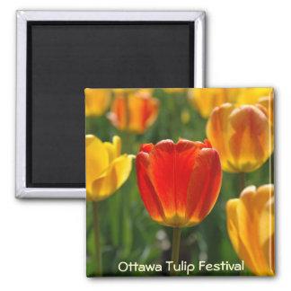 Yellow Tulips, Orange Tulips Refrigerator Magnet
