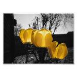 Yellow Tulips Photo Art