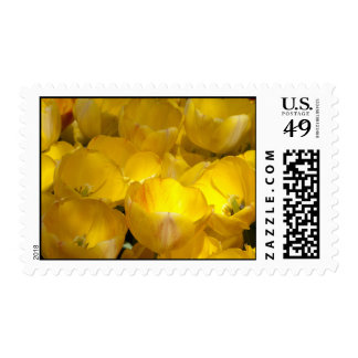 Yellow Tulips Postage Stamps