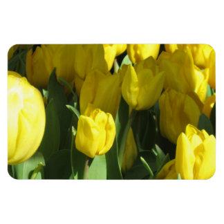 Yellow tulips rectangular magnets