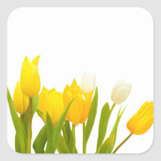 Yellow tulips square sticker