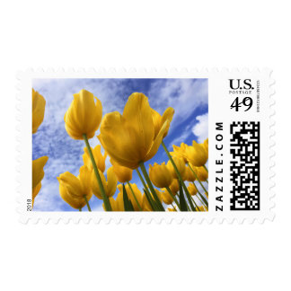 Yellow Tulips Stamps