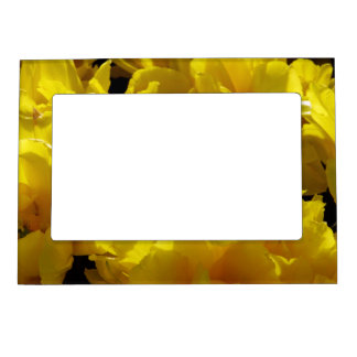 Yellow Tulips Through Sunbeams Magnetic Picture Frame