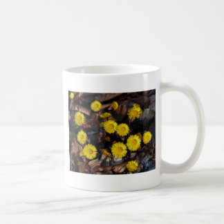 Yellow Tussilago Farfara Flowers Mugs